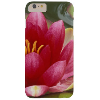 North America, USA, WA, Seattle, Woodland Park 2 Barely There iPhone 6 Plus Case