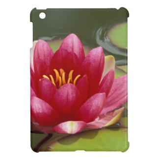 North America, USA, WA, Seattle, Woodland Park 2 iPad Mini Covers