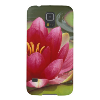 North America, USA, WA, Seattle, Woodland Park Cases For Galaxy S5