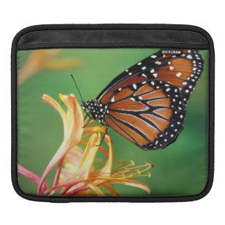 North America, USA, WA, Seattle, Woodland Park iPad Sleeve