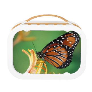 North America, USA, WA, Seattle, Woodland Park Lunch Box
