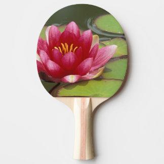 North America, USA, WA, Seattle, Woodland Park Ping Pong Paddle