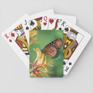 North America, USA, WA, Seattle, Woodland Park Playing Cards