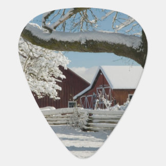 North America, USA, WA, Whidbey Island. 2 Plectrum