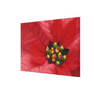 North America, USA, WA, Woodinville, Red 2 Canvas Print