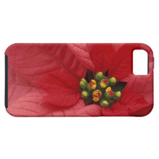 North America, USA, WA, Woodinville, Red 2 iPhone 5 Cases