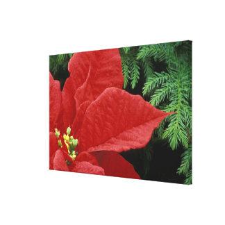 North America, USA, WA, Woodinville, Red Canvas Prints