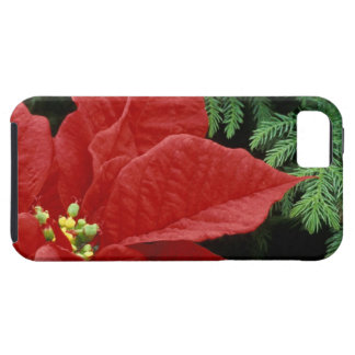 North America, USA, WA, Woodinville, Red iPhone 5 Case