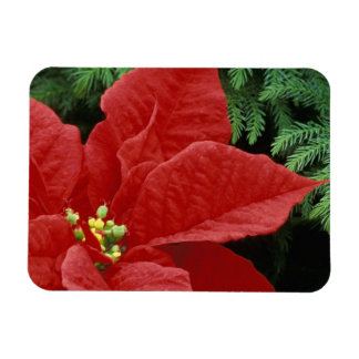 North America, USA, WA, Woodinville, Red Rectangular Photo Magnet