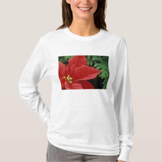 North America, USA, WA, Woodinville, Red T-Shirt