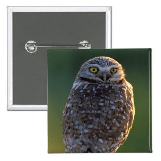 North America; USA; Washington, Burrowing Owl 15 Cm Square Badge