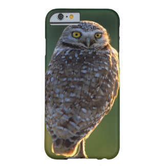 North America; USA; Washington, Burrowing Owl Barely There iPhone 6 Case