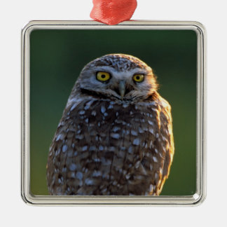 North America; USA; Washington, Burrowing Owl Christmas Ornament