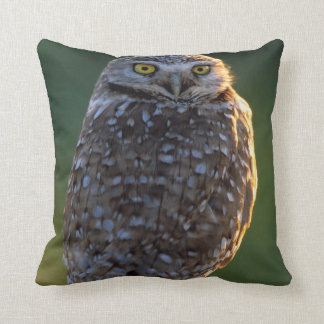 North America; USA; Washington, Burrowing Owl Cushion