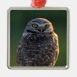 North America; USA; Washington, Burrowing Owl Ornaments