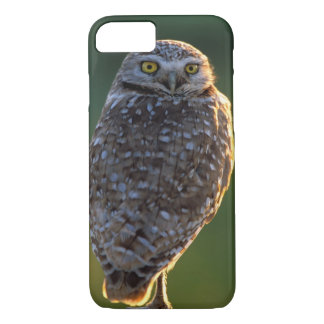 North America; USA; Washington, Burrowing Owl iPhone 8/7 Case