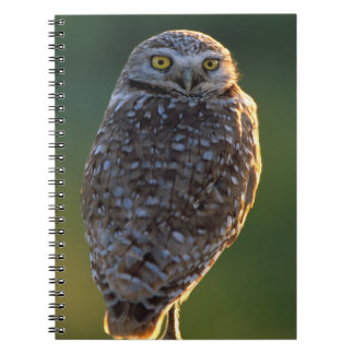 North America; USA; Washington, Burrowing Owl Notebooks