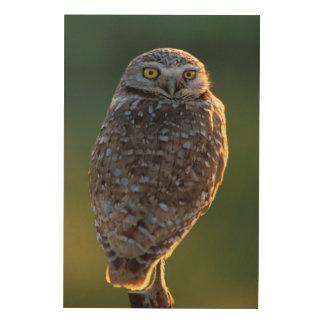 North America; USA; Washington, Burrowing Owl Wood Print