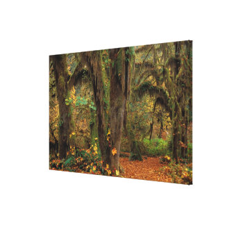 North America; USA; Washington, Moss-Covered Stretched Canvas Print