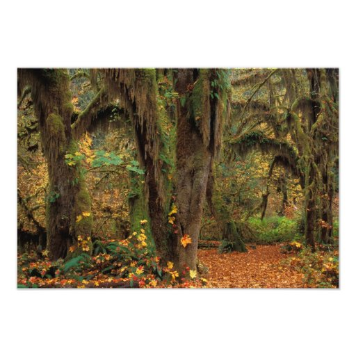 North America; USA; Washington, Moss-Covered Photograph