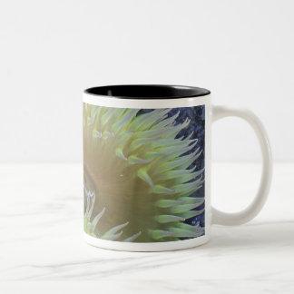 North America, USA, Washington, Olympic 4 Two-Tone Coffee Mug