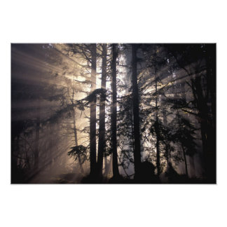North America, USA, Washington, Olympic NF, Photo Print