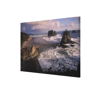 North America, USA, Washington, Olympic NP, Gallery Wrap Canvas