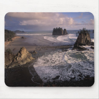 North America, USA, Washington, Olympic NP, Mouse Mat