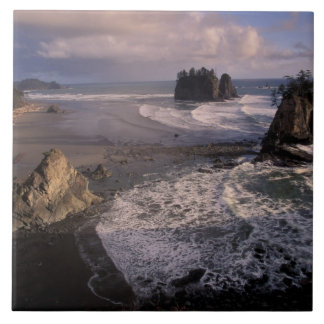 North America, USA, Washington, Olympic NP, Tile