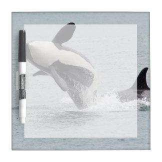 North America, USA, Washington, San Juan Dry Erase White Board