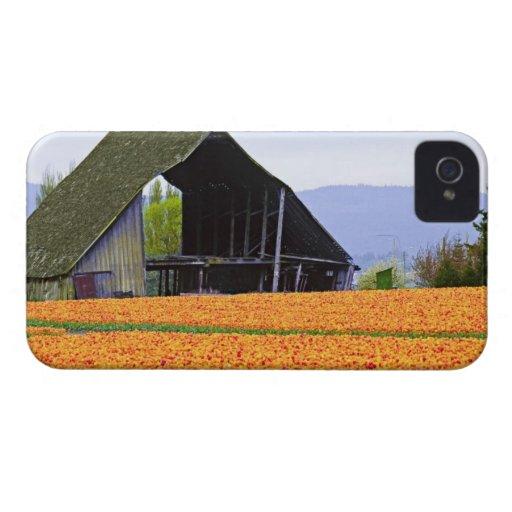 North America, USA, Washington, Skagit Valley. 2 Blackberry Cases