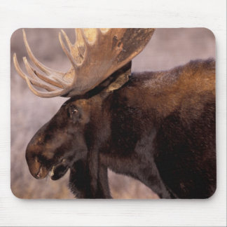 North America, USA, Wyoming, Grand Teton NP, Mouse Mat