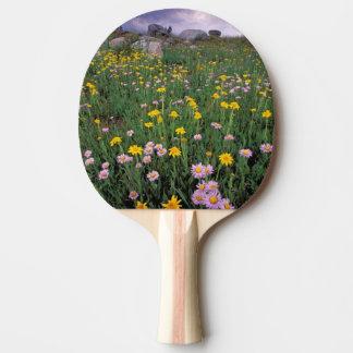 North America, USA, Wyoming, Yellowstone 2 Ping Pong Paddle