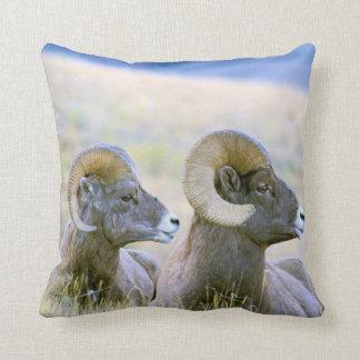 North America, USA, Wyoming, Yellowstone Cushion