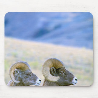 North America, USA, Wyoming, Yellowstone Mouse Mat