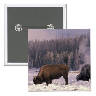 North America, USA, Wyoming, Yellowstone NP, 15 Cm Square Badge