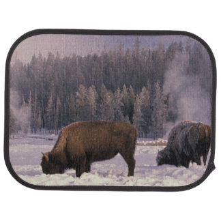 North America, USA, Wyoming, Yellowstone NP, Car Mat