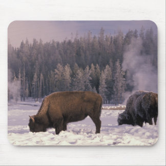 North America, USA, Wyoming, Yellowstone NP, Mouse Mat