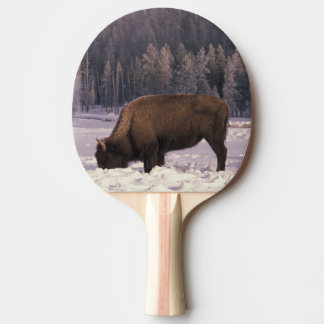 North America, USA, Wyoming, Yellowstone NP, Ping Pong Paddle