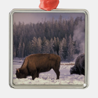 North America, USA, Wyoming, Yellowstone NP, Silver-Colored Square Decoration