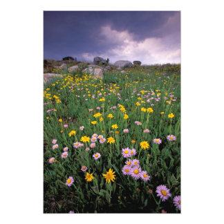 North America, USA, Wyoming, Yellowstone Photo Print