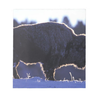 North America, Wyoming, Yellowstone National Notepad