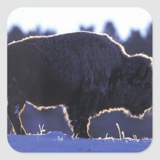 North America, Wyoming, Yellowstone National Square Sticker