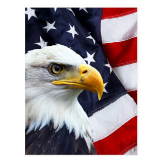 North American Bald Eagle on American flag Postcard