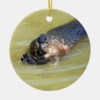 North American Beaver swimming Round Ceramic Decoration
