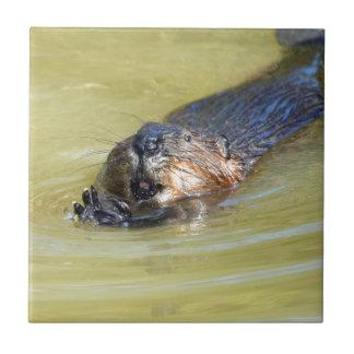 North American Beaver swimming Ceramic Tile
