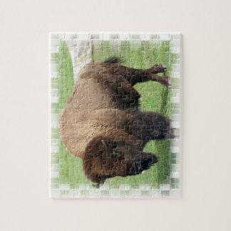 North American Bison Puzzle