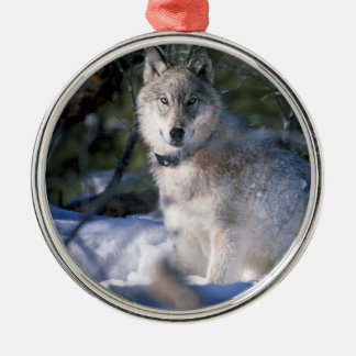 North American Timber Wolf in Snow Silver-Colored Round Decoration