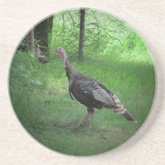North American Wild Turkey Coaster