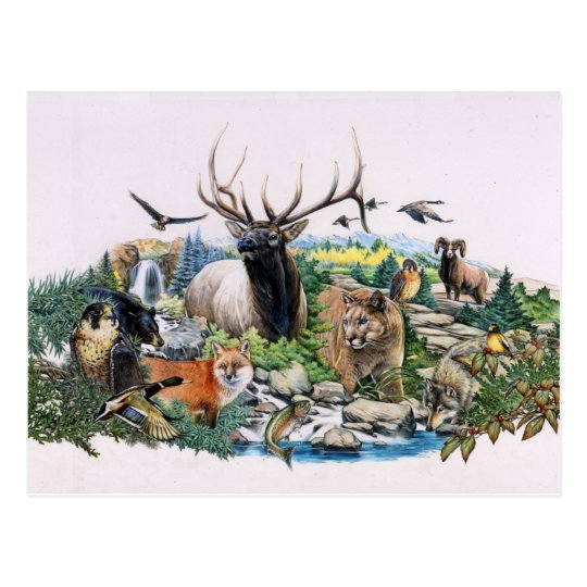 North American Wildlife Postcard